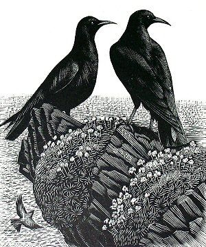 """Charles Frederick Tunnicliffe (1901-1979). Wood engraving from """"A Book of Birds"""" by Mary Priestley, 1937."""