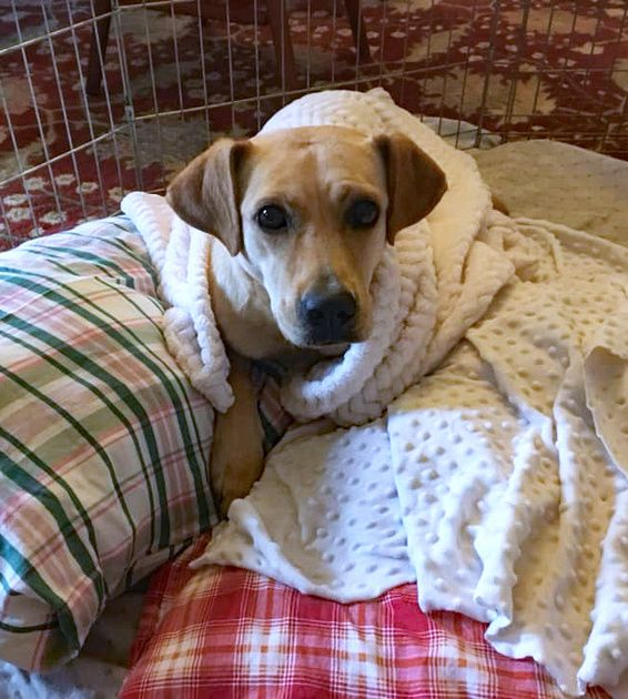 Jazz Was In Life Threatening Peril Twice The First Time Was When Hurricane Florence Hit The Carolinas In Mid September Dogs Animal Shelter Animals