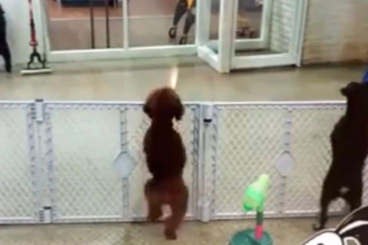 #haveyouseenthis An excited puppy began to jump at its cage and almost dance when their owner showed up to pick up the dog from puppy day care.
