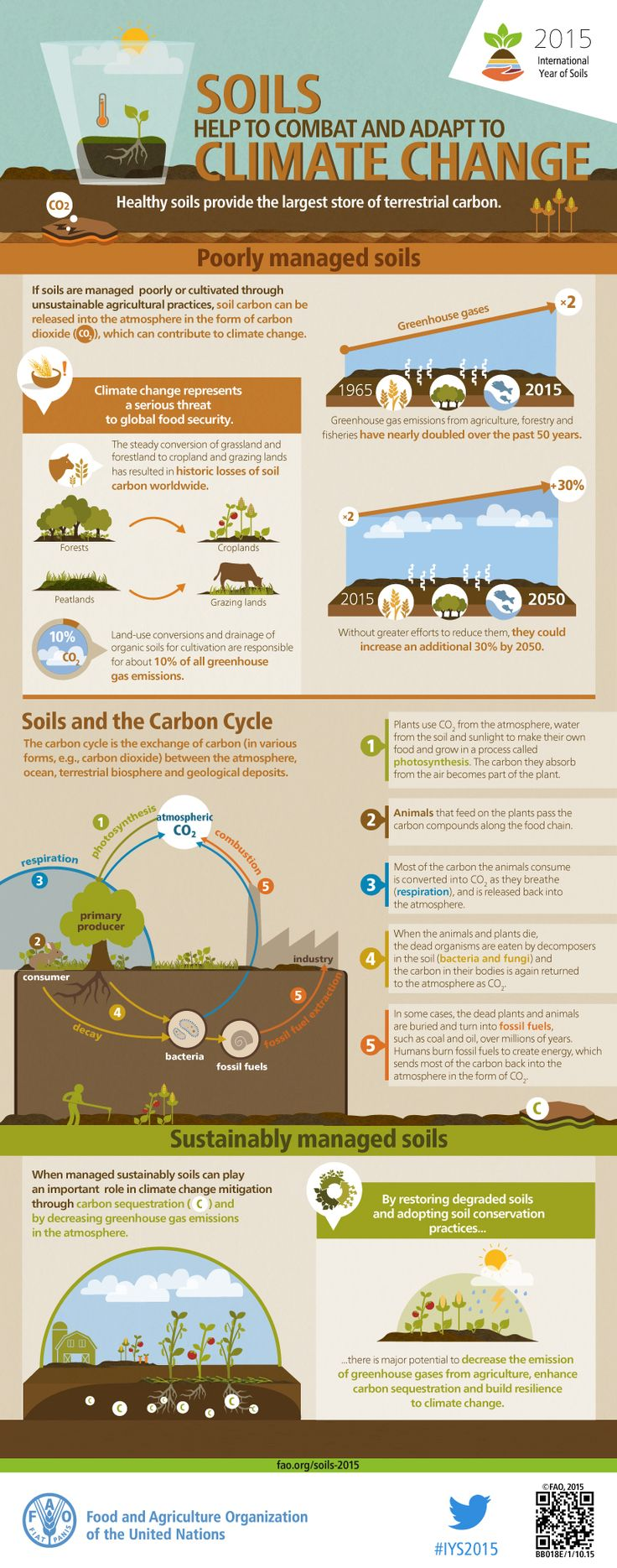 Soils help to combat and adapt to climate change - FAO