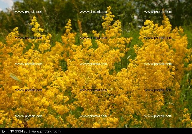 http://www.photaki.com/picture-summer-yellow-flowers_393423.htm