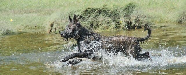 Compulsive Behavior in Dogs - PetPlace