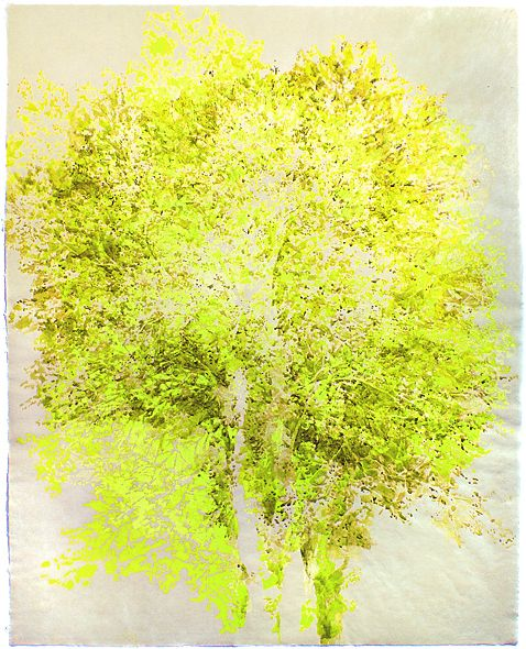 Catherine Ulitsky, 'Six Views of Nassau Maple', 2006. Watercolor and ink on paper.