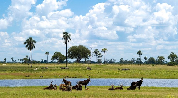 ©Wilderness Safaris   Zimbabwe