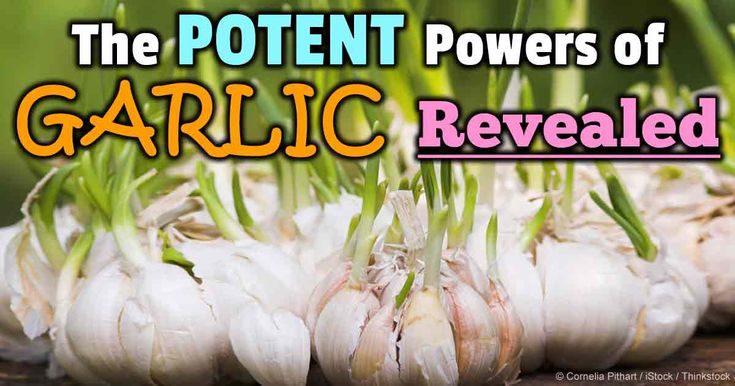 phytochemicals garlic cultivated garlic How to grow a whole bulb of garlic from a single clove  which means it's  grown not just for food, but for protection – you've probably heard  garlic is  chockful of phytochemicals and healing sulfur components like allicin,.