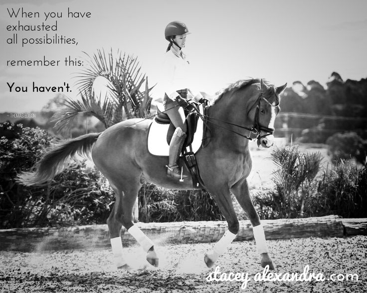 Love this quote and particularly relevant,  I feel, to training horses. Www.staceyalexandra.com