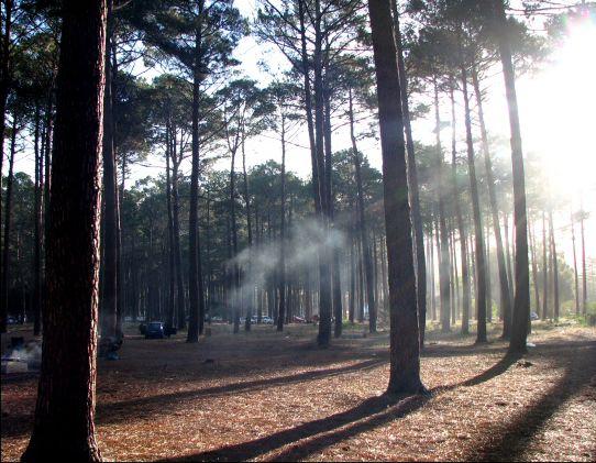 Tokai Forest, Cape Town