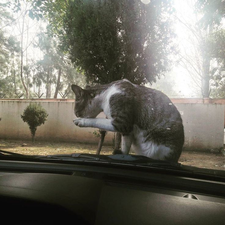 🐈 Enjoying a quiet moment in rural India.  I also enjoyed seeing her relax through the glass of my car . . #asklocal