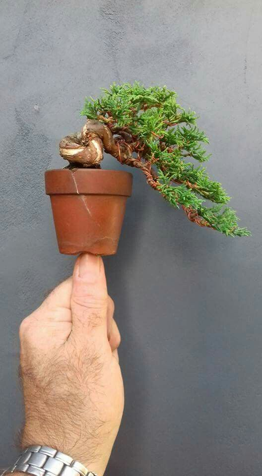 Picture of Will Baddeley Bonsai's Facebook feed.