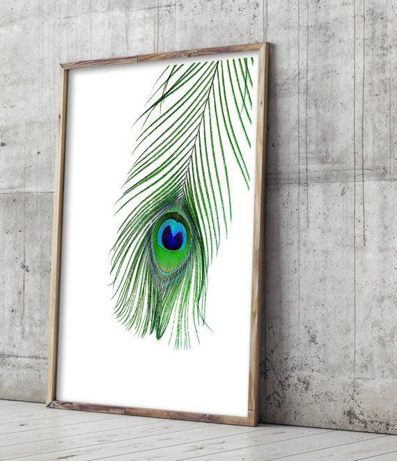 Peacock Feather Print, Feather Art. Art Prints for the walls of your home by Little Ink Empire