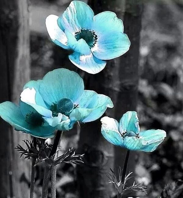 Black And White With Color Splash Blue