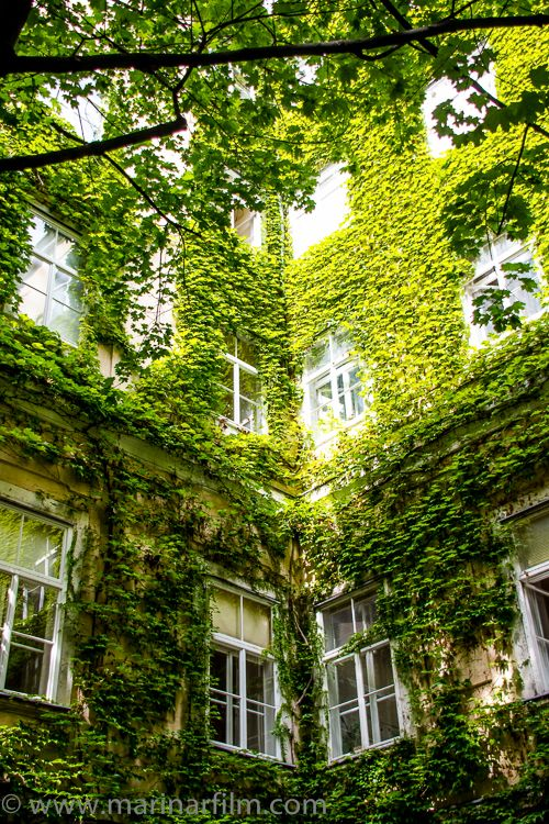 """""""The obvious can sometimes be illuminating when perceived in an unhabitual way."""" ― Daniel Quinn, """"Ishmael: An Adventure of the Mind and Spirit"""" #inspirationalphotography #artphotography #inspirationalquotes #inspirationalquote #beautifulday #danielquinn #ishmael #sunandshadow #courtyard #naturetakesover #naturereclaims #window #coolshades #crawlingplants #shade #inspiration"""