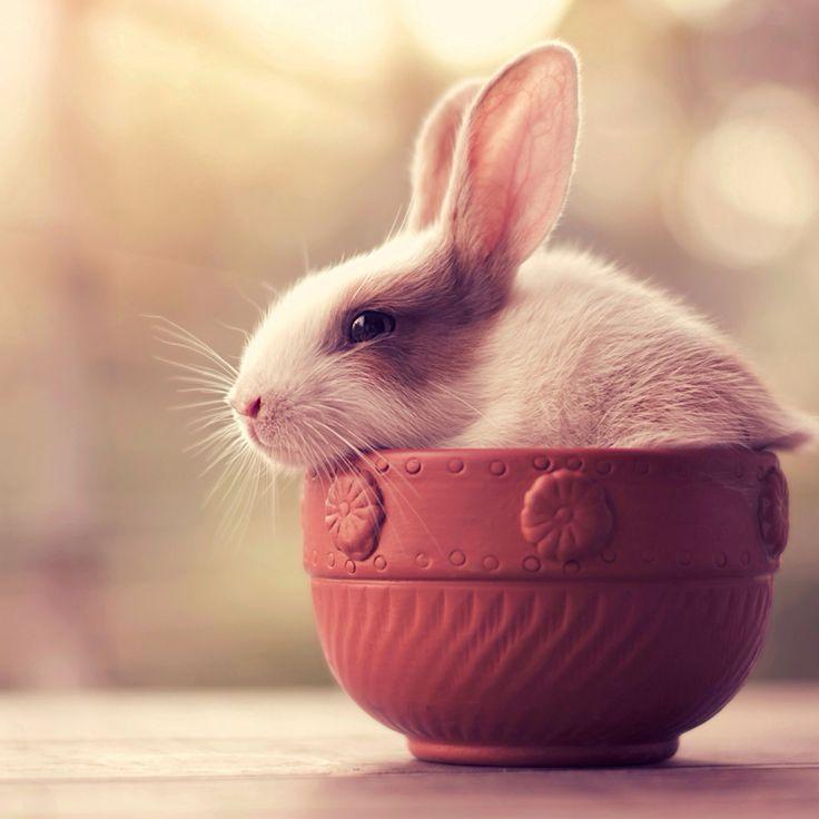 25 besten Kaninchen Bilder auf Pinterest | Hasen, Kaninchen und ...