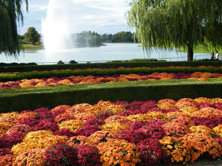Brilliant waves of mums in rich colors overlooking the