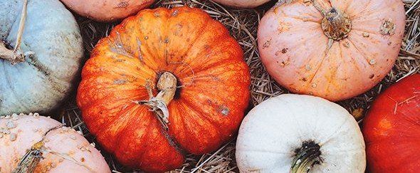 Exactly When to Plant Pumpkin Seeds If You Want Your Own Patch by Halloween