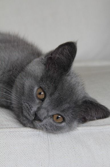 I love cats - in every color - gray ones too!!