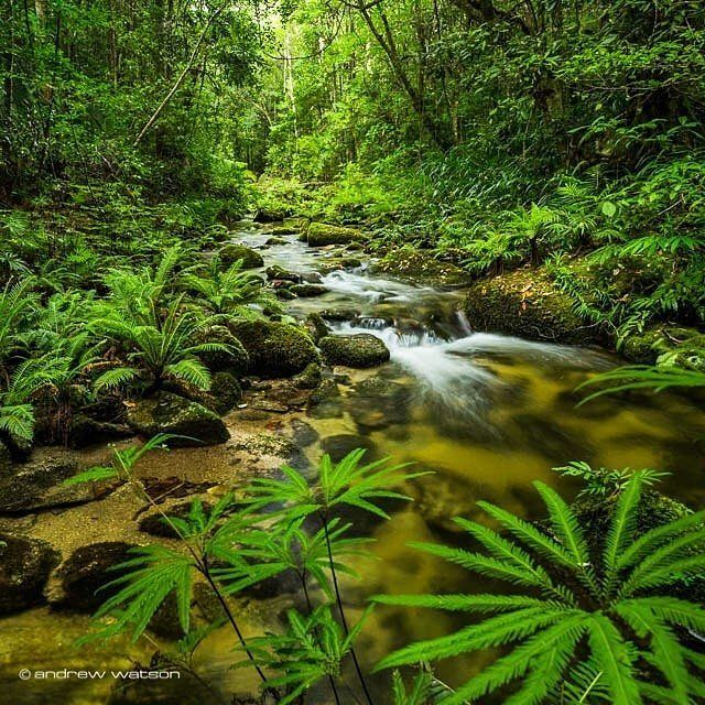 It's easy being green in #portdouglasdaintree |  by @andrewwatsonphoto