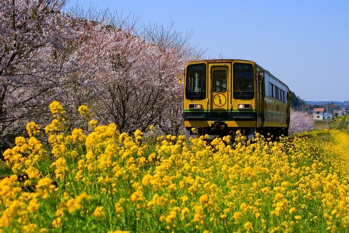 いすみ鉄道のムーミン列車は、黄色い車体に『ムーミン』キャラクターがペイントされた1両編成のローカル列車です。 可愛いムーミン谷の仲間に囲まれながら田園風景を走る・・。ムーミン列車はそんな癒しの旅をプレゼントしてくれます。