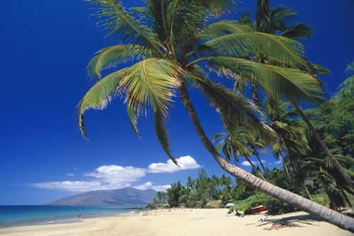 Maui - will be going here at some point..Blue Sky, Sandy Beach, Favorite Places, Oahu Hawaii, Vacations Spots, Palms Trees, Beautiful Places, Honeymoons Destinations, Beach Front