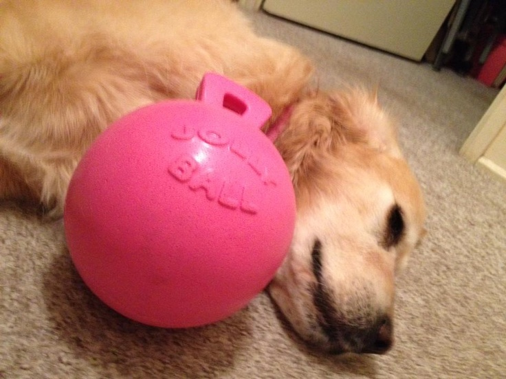 Thanks for the pic Amelia Grieve. Pin it to WIN it winner Jazzy with her new Jolly Tug-n-Toss ball! #winnersaregrinners