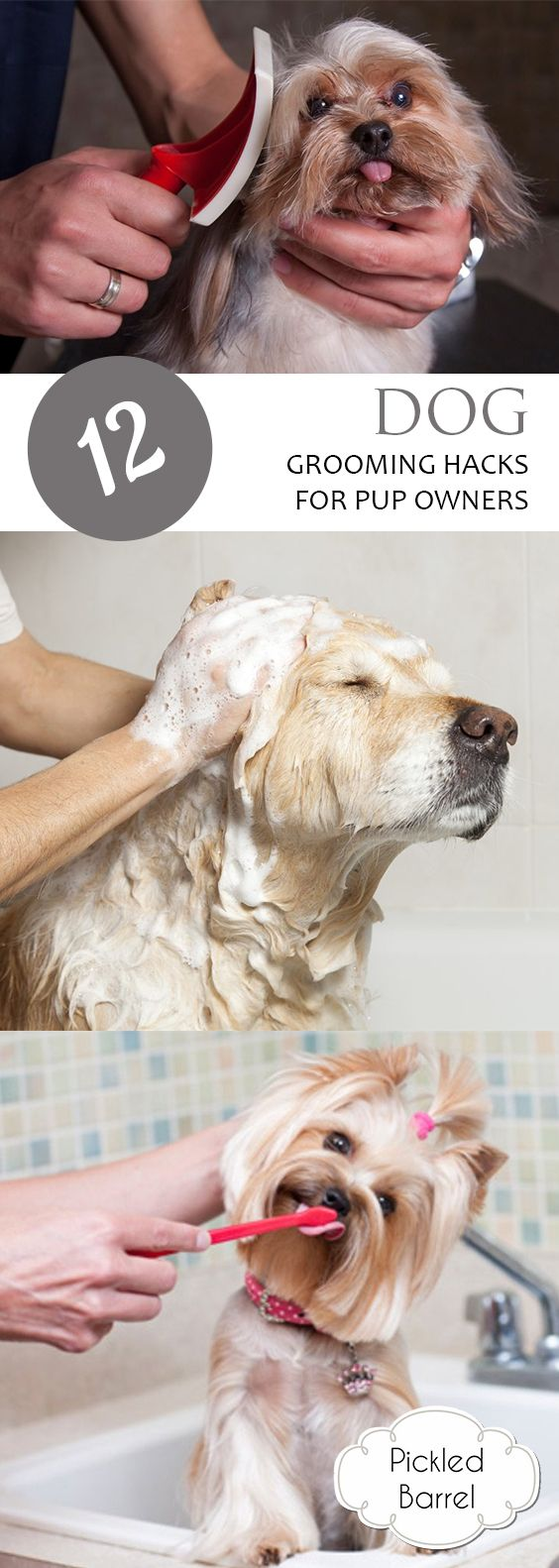 dog grooming Dog grooming salons are among the most popular pet service businesses learn how to start a grooming business and how to make it successful.