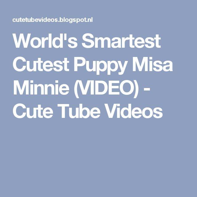 World's Smartest Cutest Puppy Misa Minnie (VIDEO) - Cute Tube Videos
