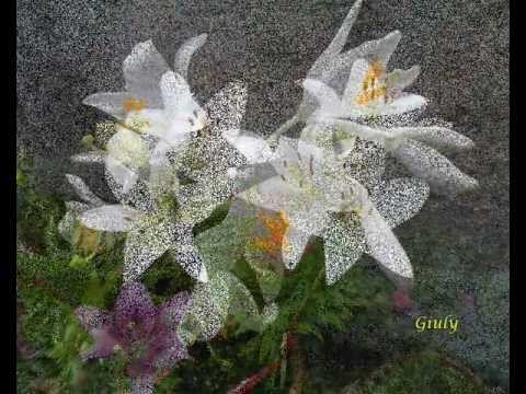 Fiori e piante velenose  2