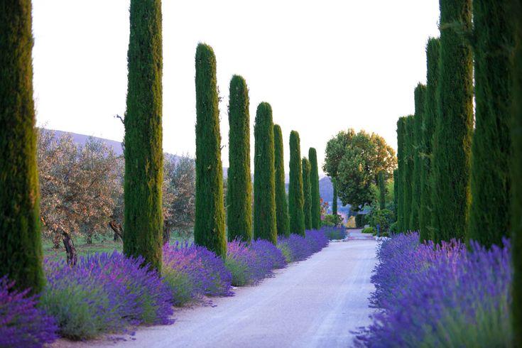 Levendula, végtelen mennyiségben: ez Provence!
