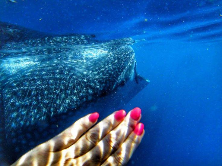 Isla Mujeres – Ostrov žen a žraloků