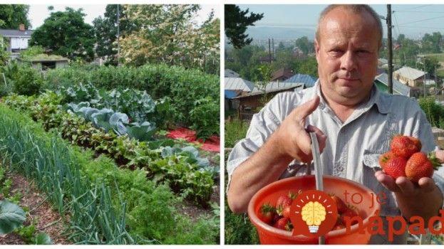 Nestojí ma to ani Euro a mám zásoby až do zimy: Túto radu mi dal svokor a poviem ju aj vám– každý záhradkár potrebuje len 3 veci z kuchyne!