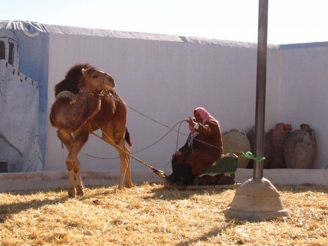 Tunisie Côté Mer Dépiquage Du Blé à Djerba à Laide Dune Machine