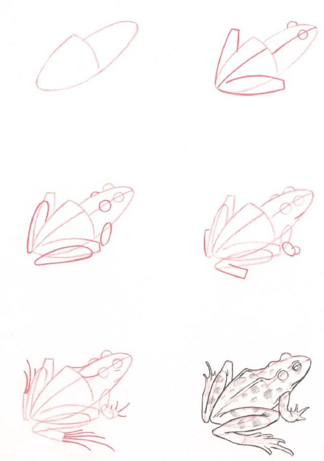 Learn to draw: Frog                                                       …