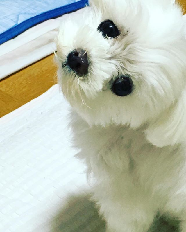 投稿された写真の中から、1週間に1枚「シュウイチDOG」としてトヨタドッグサークルで紹介させていただきます!これぞという愛犬の写真、お待ちしています!