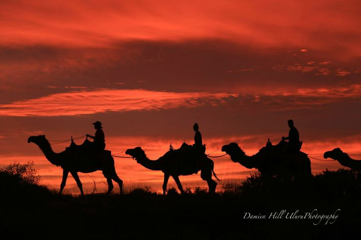 A must do while in the Northern Territory is a sunset camel ride at Uluru