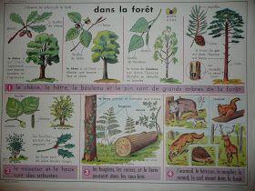 Manuels anciens: Dans la forêt