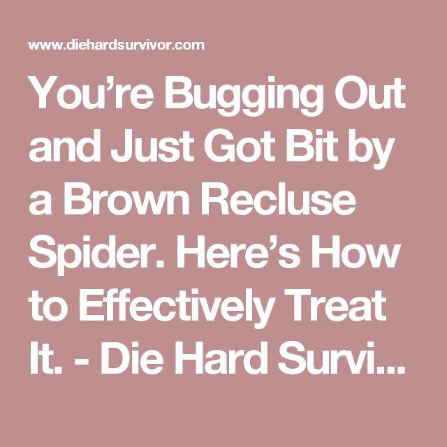 You're Bugging Out and Just Got Bit by a Brown Recluse Spider. Here's How to Effectively Treat It. - Die Hard Survivor