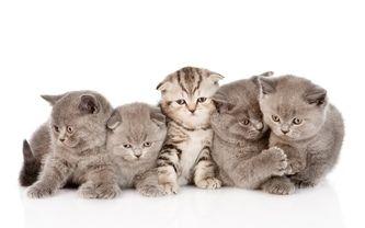 котята, малыши
