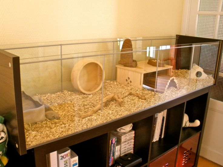 IKEA hack for hamster habitat. Could also be hacked for a box turtle habitat.