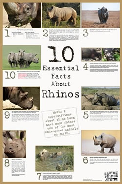 10 essential facts about rhinos