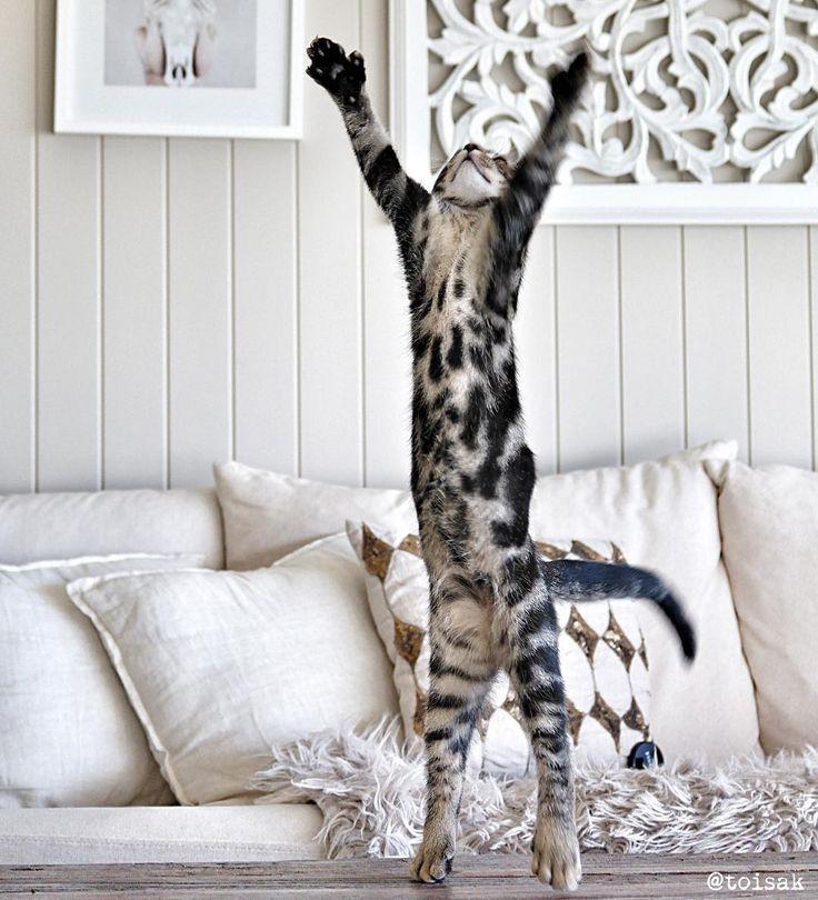 УРА #Выходные! Всем отличного отдыха! @toisak #cat #котики #кошки #дизайнинтерьера #подушки #pillows #galleria_arben