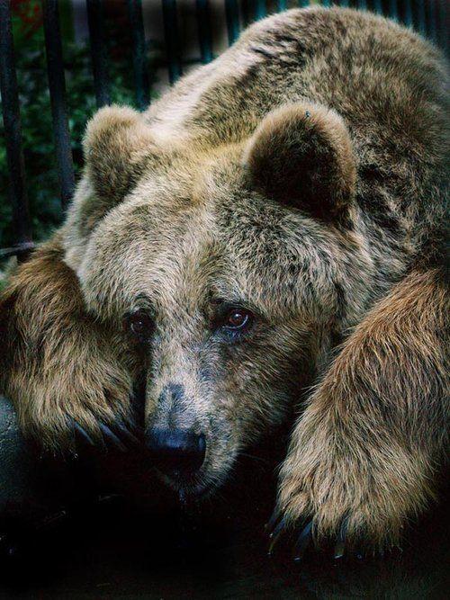 heartbroken bear. too damn far right now 😔 x hope you've had a beautiful sunday. and. miss. talk tomorrow 😢🐻