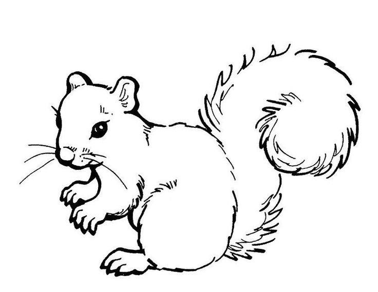 Dessin d 39 cureuil 149 cliquez pour imprimer cureuils - Dessiner un ecureuil ...