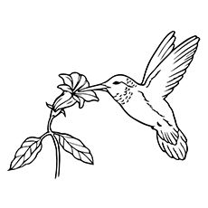 impatients coloring pages-#42