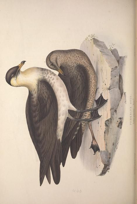 v. 5 - The birds of Europe. - Biodiversity Heritage Library