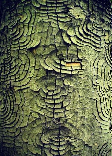 Every piece of tree bark is an expression of the tree. And every piece acts as a conduit for the trees' energy. Place your hands on any blessed tree and you can hear an ancient story of a community above ground and below.
