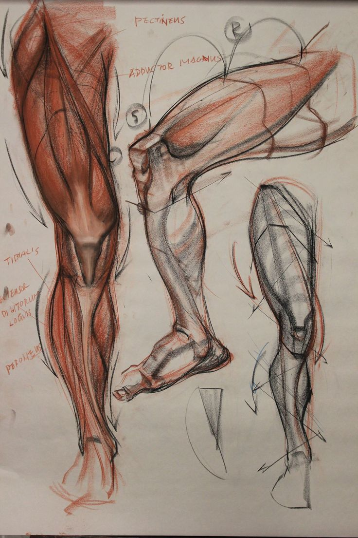 316 best Character Anatomy | Legs images on Pinterest | Art ...