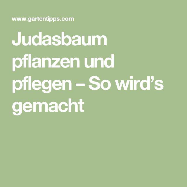 25+ Best Ideas About Judasbaum On Pinterest | Familienbild ... Pflege Von Pflanzen Probleme Grunde
