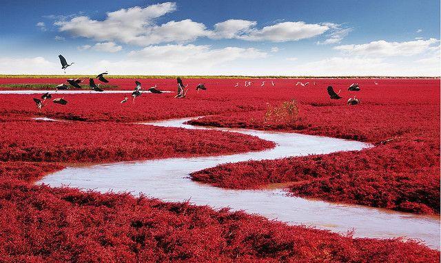 Red Blanket 红地毯 by MJiA, via Flickr