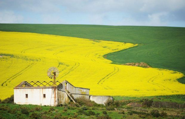 Watch: Short Film about a man in Overberg shows a colourful study of man and nature in rural South Africa