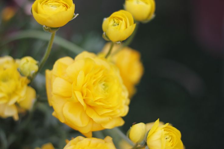 Yellow roses send a message of appreciation and platonic love without the romantic subtext of other colors. The color represents feelings of joy and delight.